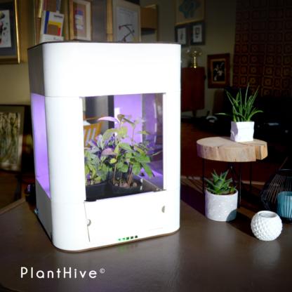 PlantHive - Regular 4